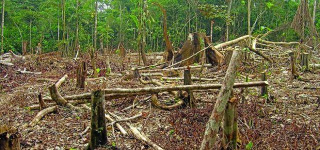 Guatemala – La selva petenera se extingue