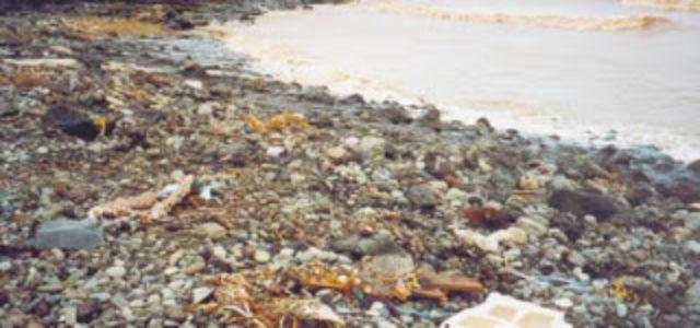 Informe de Naciones Unidas advierte sobre la destrucción del medioambiente