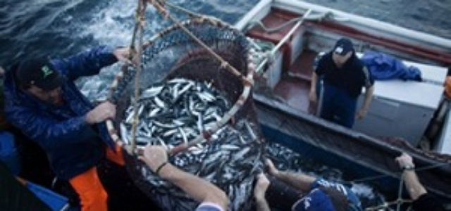 Chile: Las evidencias de los pagos políticos de las pesqueras del sur