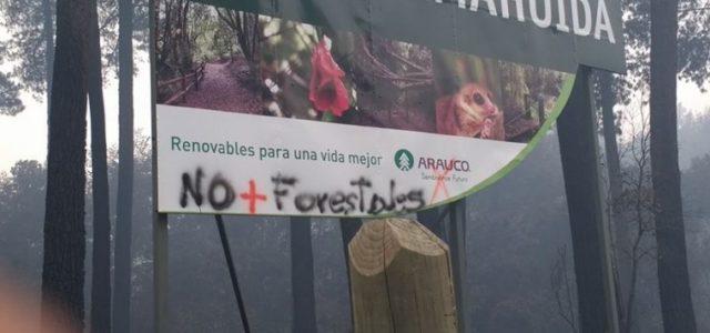 Chile: La quema del Parque Coyanmahuida y la mentira de la certificación forestal