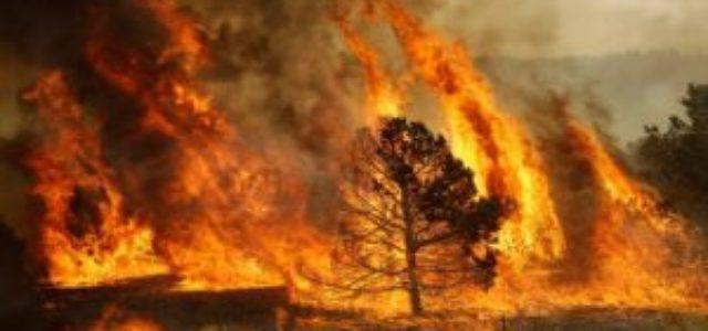 Chile – Incendio y Crisis Agraria
