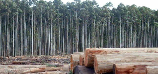 Organizaciones de Ecuador no quieren que su país copie el fracasado modelo forestal chileno