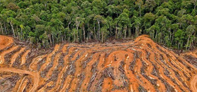 Las amenazas ambientales globales se disparan
