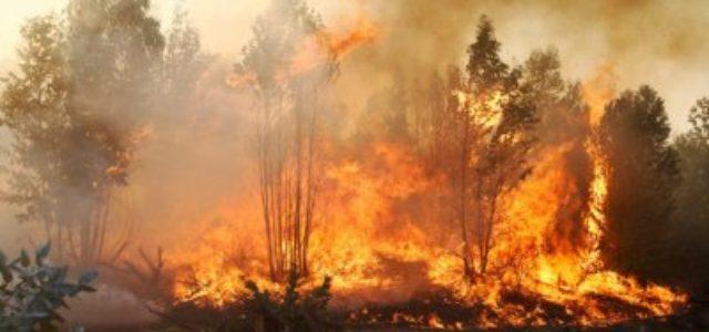¿Qué se debe aprender de los incendios forestales en el centro-sur de Chile?
