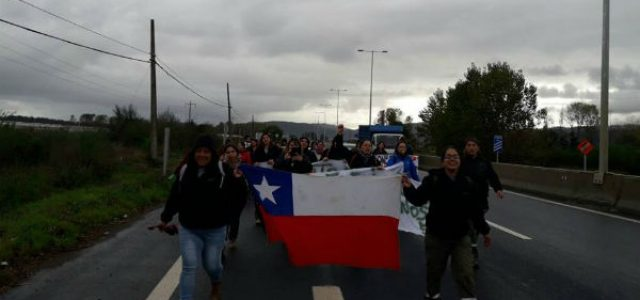 Chile – Despidos de trabajadores marcan un nuevo día de huelga en Forestal Arauco