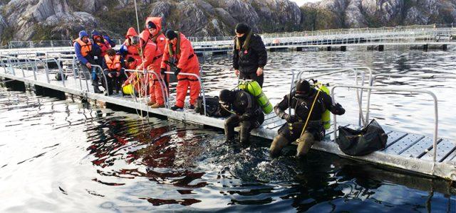 Chile – Recuperan cuerpo de buzo salmonero desaparecido en centro de cultivo en Magallanes