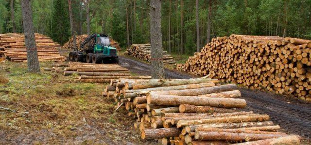 FORO| Industria Forestal en Chile: Desastre socioambiental, amenazas de la biotecnología y recuperación del bosque
