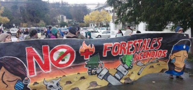 Chile – Arboles transgénicos amenazan al bosque