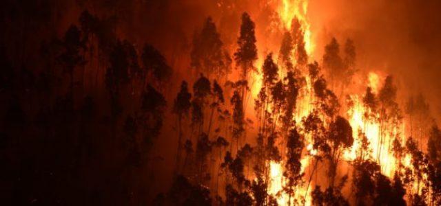 El incendio de Portugal cuestiona la política forestal de plantación de eucaliptos