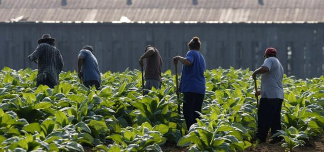 Canadá –  Trabajadores agrícolas temen ser deportados por denunciar condiciones laborales