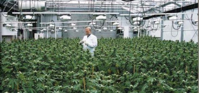 Uruguay –Imposiciones de Estados Unidos ponen en peligro la ley de regulación del Cannabis