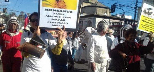 Chile – El zumbido de la histórica marcha de apicultores