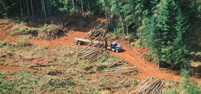 Boletín del agua – Deforestan unas 45.000 hectáreas de Amazonía peruana desde que comenzó 2017