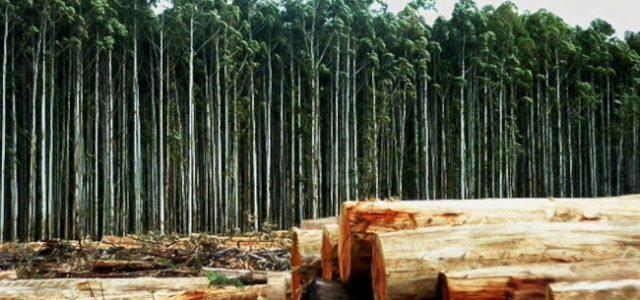 """""""lucha contra los monocultivos de árboles: """"La tarea de transformar nuestros modelos productivos"""""""