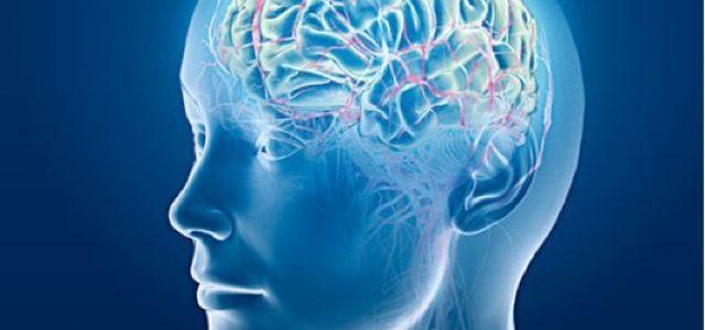 El sexo del cerebro: más allá de los prejuicios