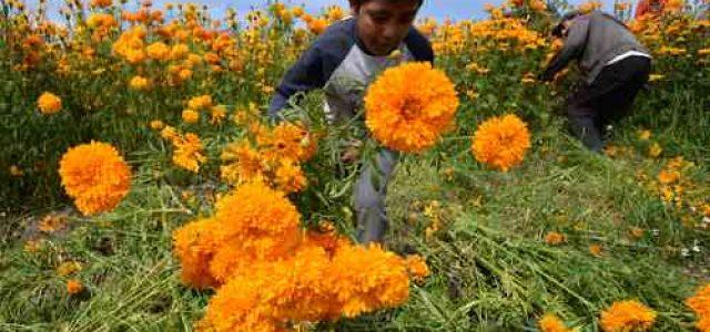 Muere un niño cada 5 minutos en situaciones de violencia: ONU