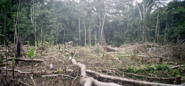 Deforestan unas 45.000 hectáreas de Amazonía peruana desde que comenzó 2017