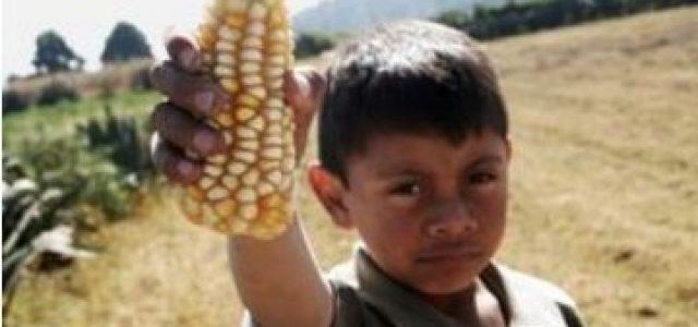 Senado mexicano aprueba ley de saqueo de biodiversidad