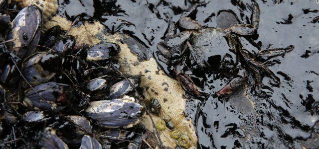 Chile – Nuevamente Mejillones bajo amenaza de crisis medioambiental