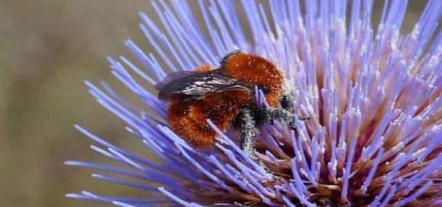 Revelan alarmante relación entre fungicidas y declive de abejorros y abejas