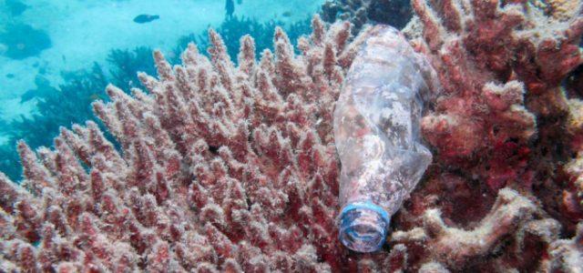 Corales amenazados por plásticos flotantes en el mar