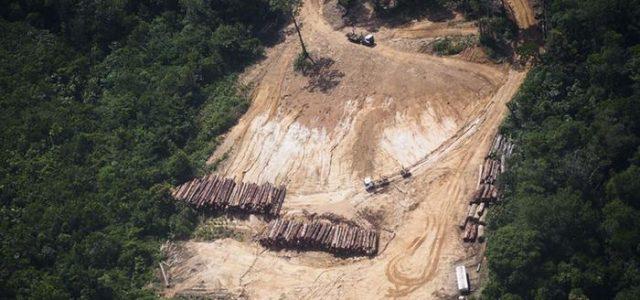 Colombia: sefueron las FARC y aumenta la deforestación