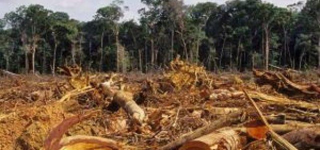 Colombia – Destrucción de la Amazonía