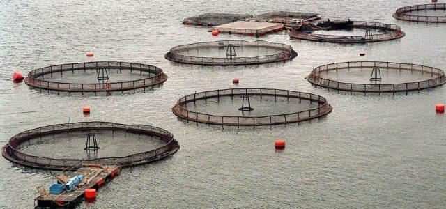 Polémica en Argentina por decisión de instalar salmoneras en el Canal Beagle