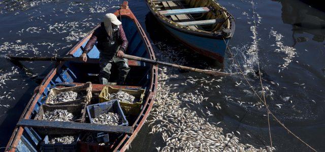 Chile – Organizaciones sociales, ONGs y pueblos originarios denuncian complicidad gubernamental en la contaminación química y biológica del mar de Chiloé