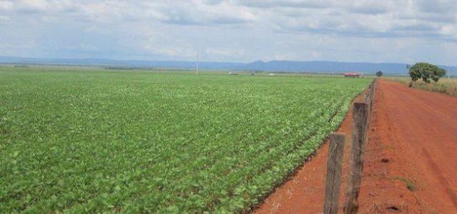 Brasil –Ser potencia agrícola deteriora la alimentación