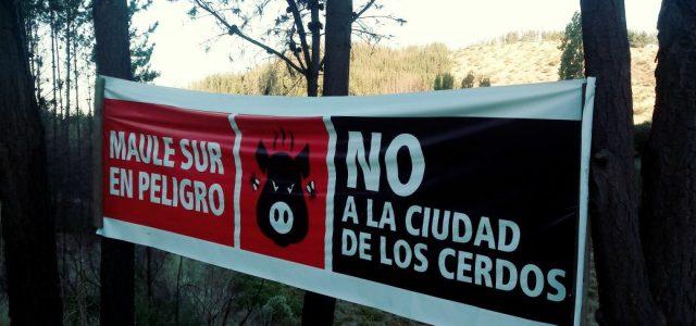 Chile – Vecinos de San Javier denuncian que planta de cerdos es contaminante