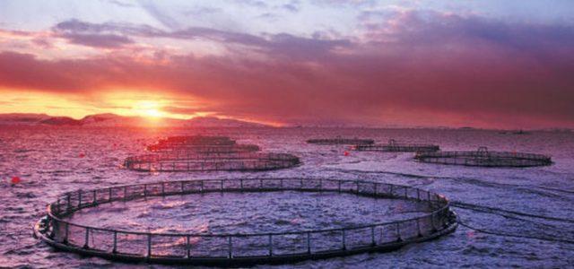 Industria salmonera y cómo destruye el fondo marino del sur de Chile