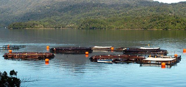 Chile – Demandan retiro de salmoneras infractoras que se instalaron en Santuario de la Naturaleza Quitralco en la Patagonia