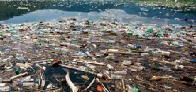 Posiciones frente a los problemas ambientales