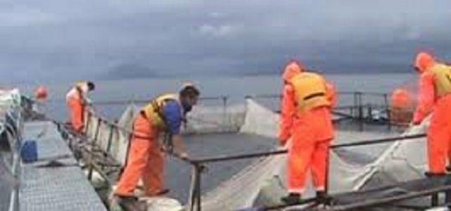 Trabajadores muertos, salmón de sangre