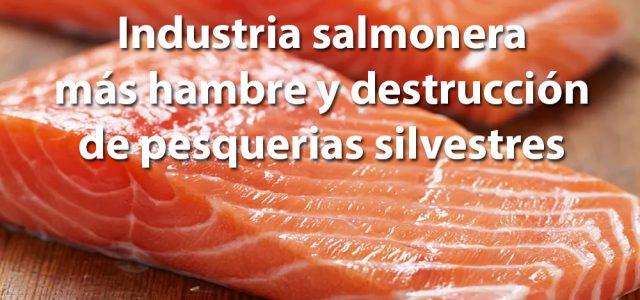 Científicos hacen caer uno de los mitos de la industria salmonera: no contribuye a disminuir el hambre ni a proteger pesquerías silvestres