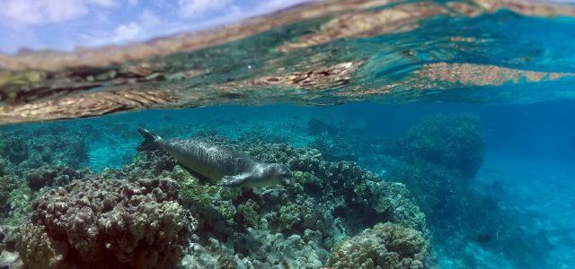 Alerta en los océanos: Expertos plantean ocho medidas urgentes para evitar una catástrofe ecológica