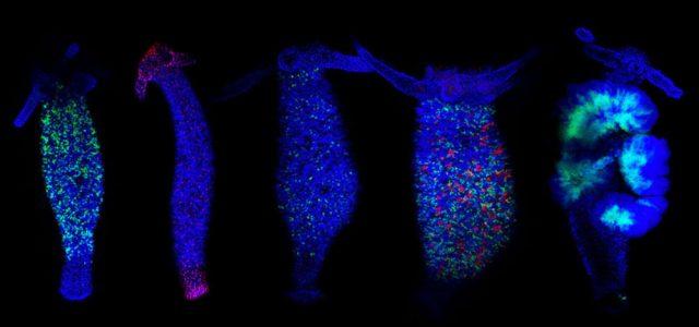 Animales eternamente jóvenes: los científicos se acercan al secreto de la inmortalidad