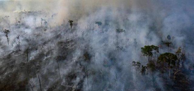 Amazonía en llamas: el daño puede ser irreversible