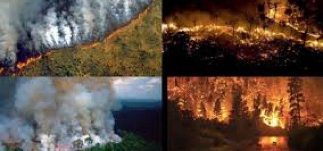Arden los grandes bosques del planeta