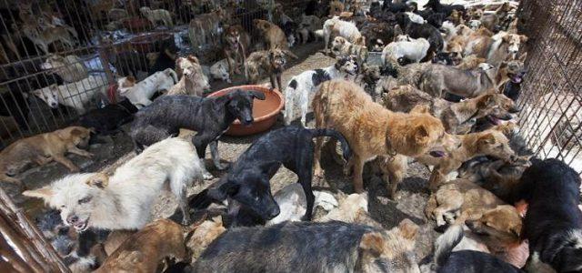 Los valientes activistas en contra de los asesinatos de animales