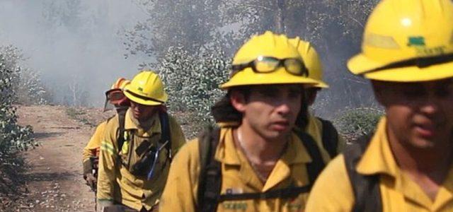 Bajo duras condiciones y con implementación precaria: brigadistas y bomberos combaten el incendio forestal en Nonguén