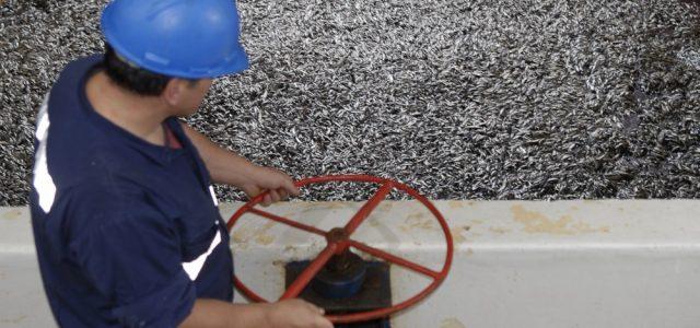 En tiempo de hambre y pandemia, gobierno autoriza a industria pesquera a elaborar harina de pescado utilizando especies destinadas al consumo humano